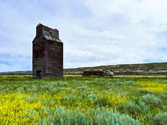 Elevator & Transport (djking) Tags: alberta badlands canada dorothy thealbertapacificgraincoltd semitruck grainelevator