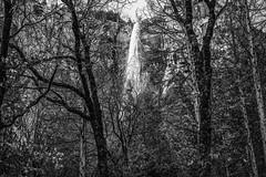 Bridalveil, Yosemite National Park, California (paccode) Tags: solemn waterfall d850 landscape nationalpark brush blackwhite quiet california forgotten yosemite forest creepy hills scary monochrome bushes serious mountain yosemitenationalpark unitedstatesofamerica