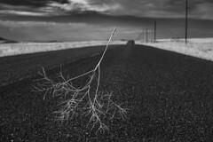 Lil' Tumbler (JasonCameron) Tags: monochrome black white bw utah west desert roam wander sights tumble weed road alone solitude dry sky drive less traveled