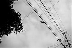 6.12.19 (arterial spray) Tags: 35mm 400 40mm bayarea ca california canon dalliswillard dalliswillardphotography delta film g ilford mcw nikon rebel sanfrancisco sf siliconvalley