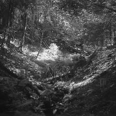 Sächsische Schweiz_Kiev6C_02 (ambient norge) Tags: analog mittelformat mediumformat kiev kiev6c hp5 sächsische schweiz