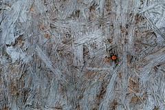 Nailed It (eddi_monsoon) Tags: 52weeks 52 52weeksthe2019edition garagedoor plywood nail