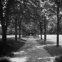 Schloss Pillnitz_Kiev6C_01 (ambient norge) Tags: analog mittelformat mediumformat kiev kiev6c hp5 sächsische schweiz