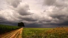 On a cloudy sunday afternoon (Luc.T) Tags: belgium kobbegem vlaanderen cloudy bewolkt sky