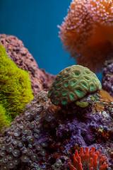 Octopus's Garden (LadyBMerritt) Tags: underwater colour anemone creatures water aquarium