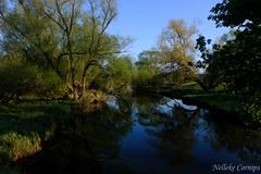 River Seege (Nelleke C) Tags: 2019 elbe laasche seege duitsland germany holiday landscape landschap river rivier spring sunrise vakantie voorjaar zonsopkomst
