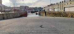 Puerto de Donostia (eitb.eus) Tags: eitbcom 32961 g152015 actualidad gipuzkoa donostiasansebastian jonhernandezutrera