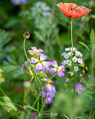 During my walk with willow in Chiswick park I come across this beautiful patch of wild flowers, beautiful and brightly coloured in the morning sun. · · · · · #chiswick #chiswickhouse #chiswickdogshow #chiswickliving #chiswickdogs #chiswickmums #chiswickpa (justin.photo.coe) Tags: ifttt instagram during walk with willow chiswick park i come across this beautiful patch wild flowers brightly coloured morning sun · chiswickhouse chiswickdogshow chiswickliving chiswickdogs chiswickmums chiswickpark fashion chiswickgallery chiswickvillage flowerstagram flowerslovers flowersofinstagram flowerssuperpics flowersnirvana flowershop flowerstalkingflowersshotz spring flowerstylesgf flowersandlife flowersandmacro kingsflora worldbestflower florist floweroftheday flowerstyle flowershow justinphotocoe