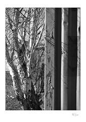 Twigs (radspix) Tags: mamiya 645 zoom c n 45 f plus hp5 mm pyro ilford 1000s pmk sekor 55110