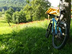 Mohnblüte (shortscale) Tags: fahrrad mtb mountainbike corratec superbow wiese mohn blume baum