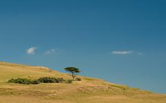 Serengeti? No just Abbotsbury, Dorset - we need some rain (John Grindle) Tags: em5markii omd landscapes landscape olympus landscapephotography