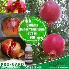 profert-nar (Profert Gübre) Tags: meyvecilik meyve damlama sebze sebzecilik seracılık sera sulama fertilizer farmer