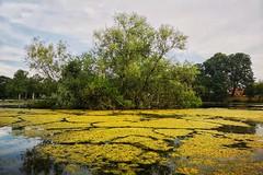 197/365 (Charlie Little) Tags: carlisle cumbria hammondspond landscape cameraphone mobilephotography huaweip20pro leica p365 project365