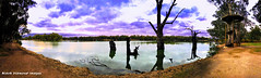 The Confluence of the Darling and Murray Rivers at Wentworth, NSW (Black Diamond Images) Tags: confluence darlingriver murrayriver wentworth nsw appleiphonex iphonexbackcamera iphonexpanorama appleiphonexpanorama panorama iphone bourkeback july2019 darlingmurrayriverjunction viewingtower darlingandmurray riverjunction shotoniphone landscapepro