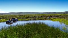 Moorland Pool (prajpix) Tags: wild wildflower flower moor moorland bog pool verdant nature sky summer hill hillside invernesshire highlands scotland rocks erratic lochan water rushes rush reflection