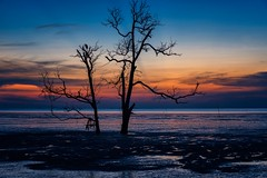 I'll be Home , I'll Be Free (Anna Kwa) Tags: sunset blue lonetree bird silhouettes muar malaysia annakwa nikon d750 my tears cry home free always seeing heart soul throughmylens life journey fate destiny remembrance july15 allmytears juliemiller