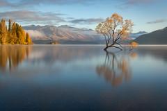 Day Break (Sinclair's) Tags: wanaka tree autumn new zealand lake reflection sunrise water mountains south island