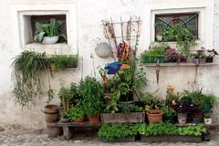Green Fingers (Alan1954) Tags: salzburg green flora austria holiday 2019