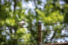 Bird on a Wire II (Alexander Day) Tags: bird wire barped green blue colorful liberty state park nj new jersey city alex alexander day fauna animal animals birds