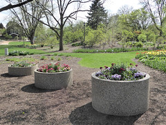 Lombard, IL, Lilacia Park, Spring, Planter Trio (Mary Warren 13.6+ Million Views) Tags: lombardil lilaciapark nature flora plant spring park garden blooms blossoms flowers planters