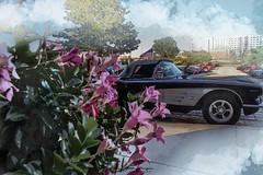 """61"" Vette (kmac1960) Tags: corvette classiccars hotrods carshow creative digitalart americancarshow carshowphotography carphotos"