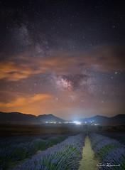 Estrellas a iso 8000 (carlosizquierdovazquez) Tags: explore stars cloud nubes estrellas longexposure largaexposición noche campo espliego lavanda f18 20mm samyang alfa7ii sony iso8000