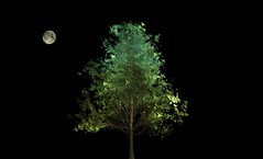Full moon 🌕 and tree ... (Julie Greg) Tags: moon fullmoon tree texture colours canon night england kent art abstract