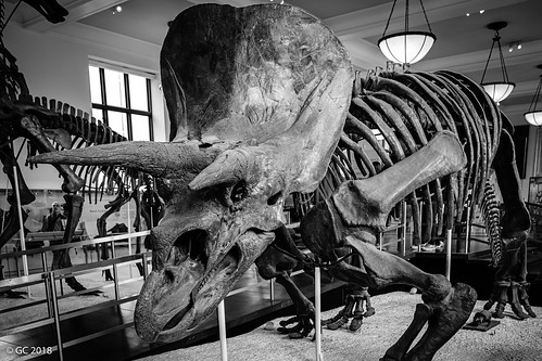 Hall of Ornithischian Dinosaurs, New York City, USA