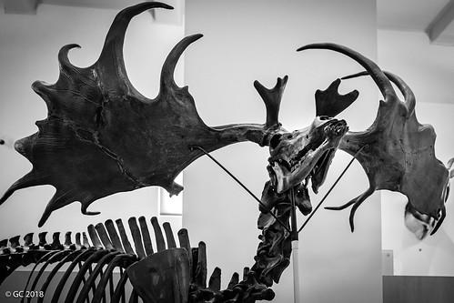 Paul and Irma Milstein Hall of Advanced Mammals, New York City, USA