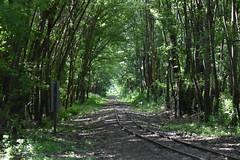 Gemenci Állami Erdei Vasút (polgar79) Tags: kisvasút erdő railway hungary malomtelelő tamron 70300 nikon d3500