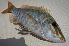 Taman (namhdyk) Tags: fish fishing sea sonyrx100 sony