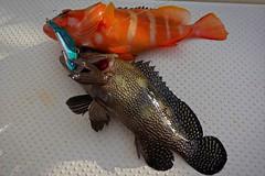 Double Catch (namhdyk) Tags: fish fishing sea sonyrx100 sony