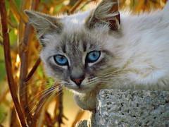 Tienimi con te, anche in vacanza!! (antonè) Tags: gatto micio gattino cat chat abbandono occhi ritratto sassari sardegna antonè
