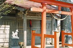 An Inari Shrine (しまむー) Tags: minolta α9000 af 50mm f17 kodak gold 200 横浜 菜の花 蕪島神社 列車 train yokohama kabushima