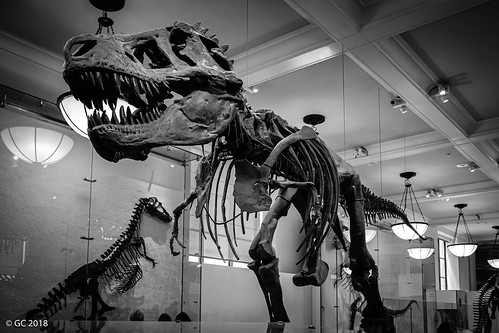 Hall of Saurischian Dinosaurs, New York City, USA
