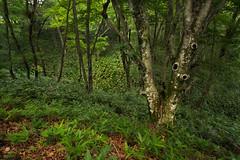 20190716a7r3_9653 (Gansan00) Tags: ilce7rm3 α7rⅲ sony zeiss japan 日本 snaps ブラリ旅 fe1635mmf4 trekking tree mountain 山登り 登山 緑 green 7月 yamaguchi syunan naganoyama 山口県 周南市 長野山