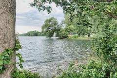 Lake on the Mountain (gabi-h) Tags: lakeonthemountain princeedwardcounty picton lake water mystery trees gabih leaningoverthewater shore summer ontario