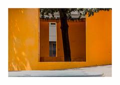 Été (hélène chantemerle) Tags: murs arbre ombres soleil jaune orange walls tree shadows sun summer yellow