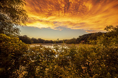 Fiery skies over Wing Lake (Mercenaryhawk) Tags: canon eos 5ds 5dsr wing lake minnetonka minnesota mn summer warm hot humid storm after water flood trees green yellow colorful clouds striking sunset lilypad leaves rain rokinon 14mm sp 24