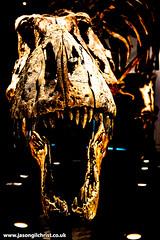 A face full of T. rex - Trix at Kelvin Hall Glasgow (www.jasongilchrist.co.uk) Tags: tyrannosaurus rex trex dinosaur skull glasgow kelvinhall scotland trix theropod fossils palaeontology cretaceous paleontology hunterian trexintown dinosaurs fossil fossilskeleton fossilskull dinosaurskeleton dinosaurskull