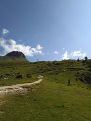 IMG_20190710_095956 (Puntin1969) Tags: telefonino vacanze luglio trentino montagna altavaldifiemme fiemme cime