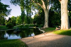 Bird Watching (dlerps) Tags: amount austria city daniellerps eu europe lerps photography sony sonyalpha sonyalpha99ii sonyalphaa99mark2 sonyalphaa99ii urban vienna wien httplerpsphotography lerpsphotography österreich lake pond sunshine sunset sitting park gardens tree chilling chillout carlzeiss distagont224 distagon2420za carlzeissdistagon carlzeissdistagon24mmf20 pidgeon evening summer liechtensteinpalais liechstensteingarten liechstensteingardens