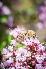 bee (Justin Case Foto) Tags: fuji topcon macro nature bee flower petal color summer