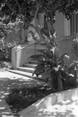 NikonF100_HP5+1_2441 (KyleKisling) Tags: nikon nikonf100 f100 film nikkor filmisnotdead filmshooter filmisalive shootfilm shootnikon staybrokeshootfilm shootfilmstaybroke ishootfilm pushedfilm pushitastop hp5 ilford ilfordfilm ilfordhp5