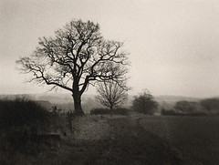 Tree (justin.syndercombe) Tags: film filmisnotdead darkroom ilford hp5 art300 canoneos30 lensbaby tree buttsbury