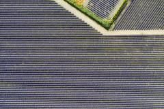 geometric lavender (Rafael Zenon Wagner) Tags: lavendel lavender geometrisch geometric feld field france frankreich dji fromabove muster pattern