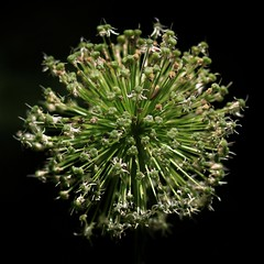 D123 (Mirek-Szymanski) Tags: flowers flower blossom natural nature minimalism minimalismo minimalismus