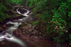 Viridescent (snapdragginphoto) Tags: courthousecreek fr119 water rain rhododendron carolinarhododendron verdant green viridescent moutains blueridgemountains stream creek rocks flowers pink lush