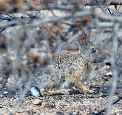 07162019000012405 (Verde River) Tags: landscape bird birds cactus nature rabbit