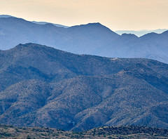 07162019000012390 (Verde River) Tags: landscape bird birds cactus nature rabbit